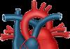 Condizioni cardiache malattie cardiovascolari