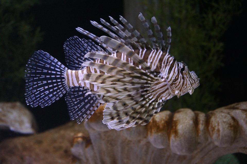 Fish XXL – controindicazioni – effetti collaterali