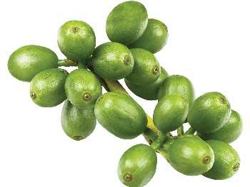 Green Coffee - composizione - funziona - come si usa - ingredienti