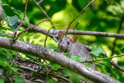 Pest Away - controindicazioni - effetti collaterali