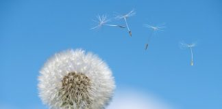 Allergia sintomi, tipologie e trattamento
