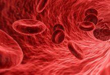 Sangue - composizione e funzioni