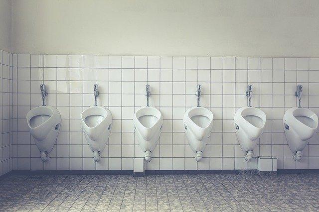 L'apparato urinario
