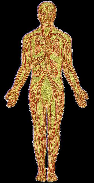 Sistema circolatorio i vasi sanguigni