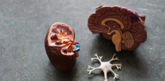 Iperfunzione surrenalica cause, sintomi e trattamenti