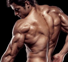 X-Muscle - composizione - funziona - come si usa - ingredienti