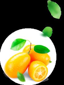 Fortunella - composizione - come si usa - ingredienti - funziona